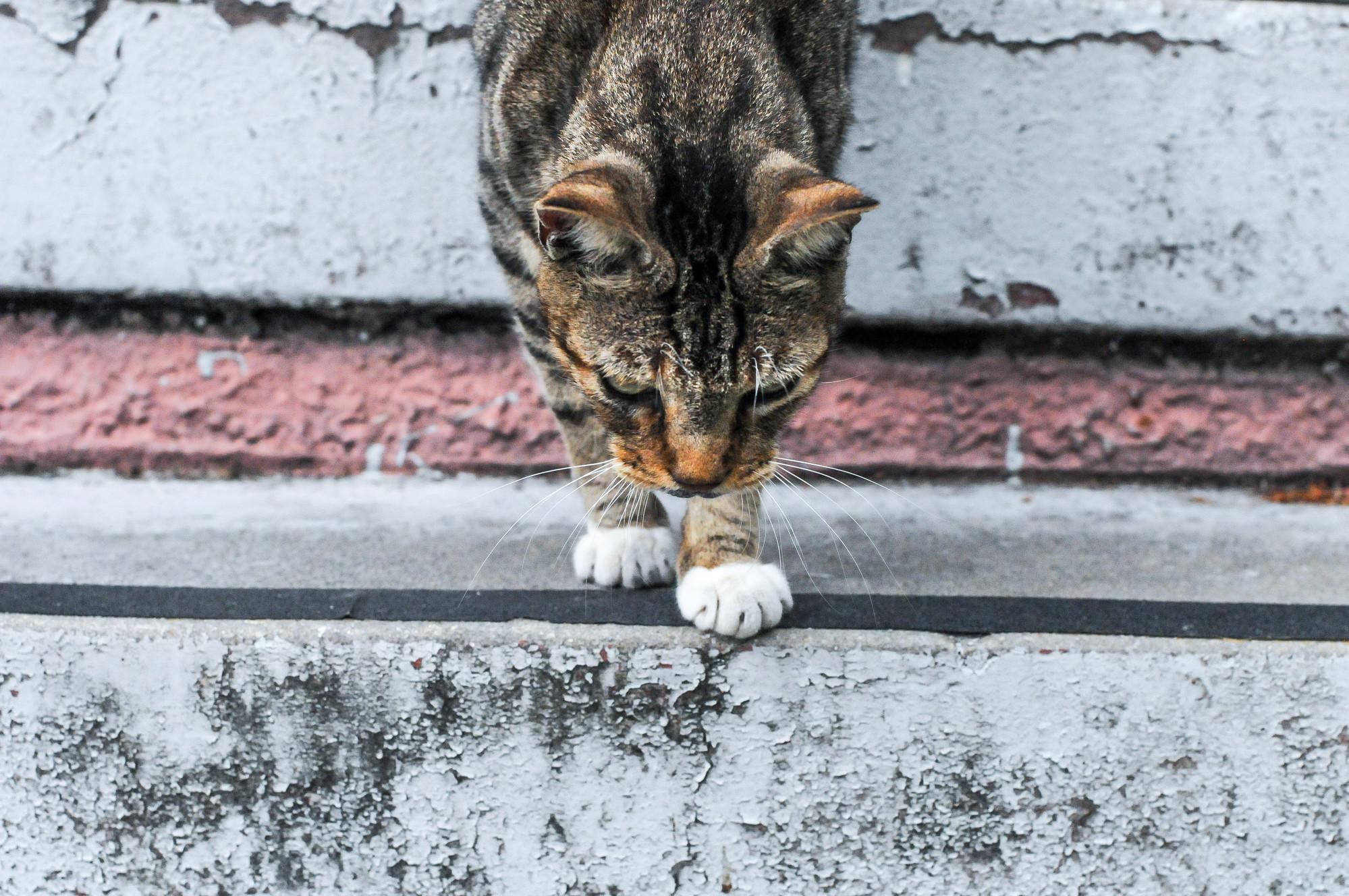 New Orleans Cat